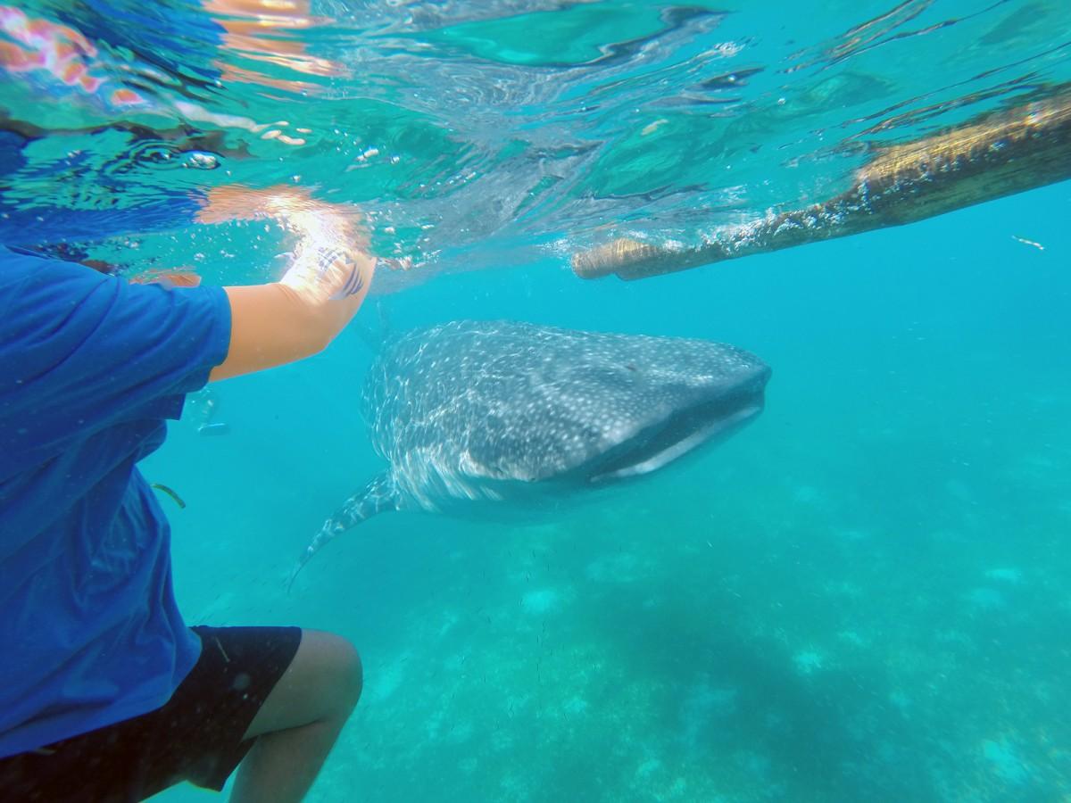 오슬롭 고래상어 투어
