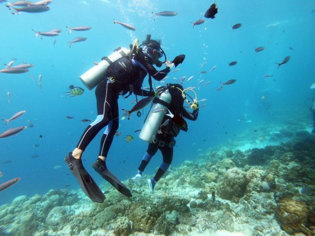 discovery-diving.JPG